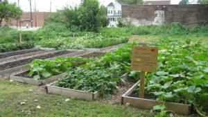 1024px-2007_Comella_community_garden_ClevelandOH_1353039387