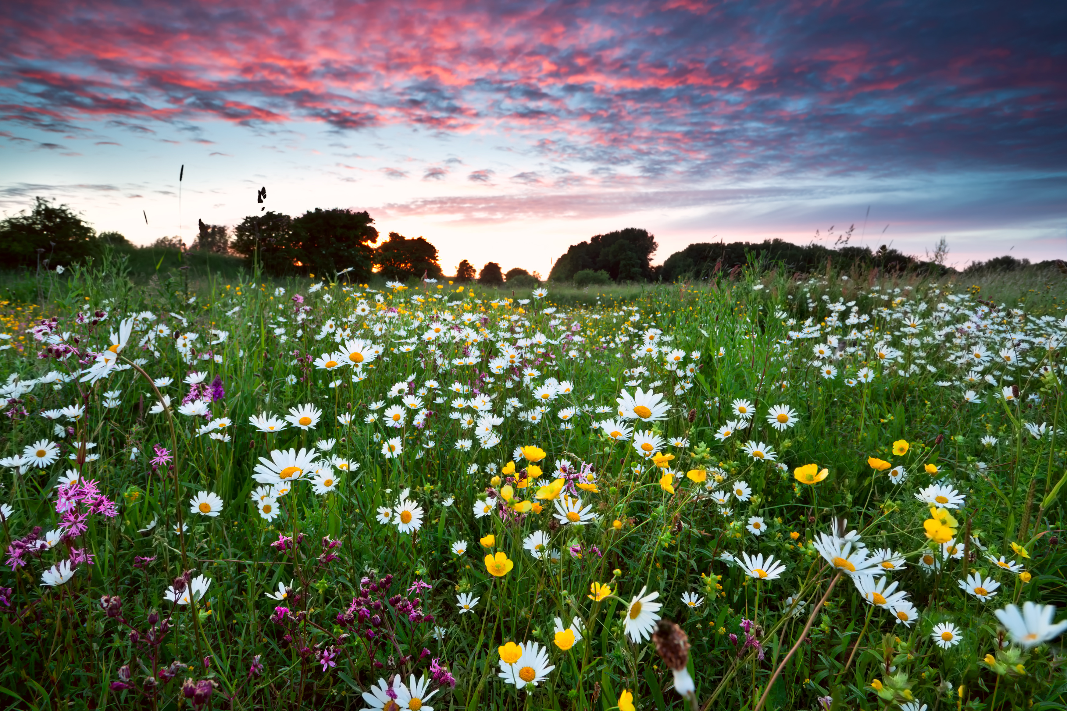 3 benefits of wildflowers in your garden anew green