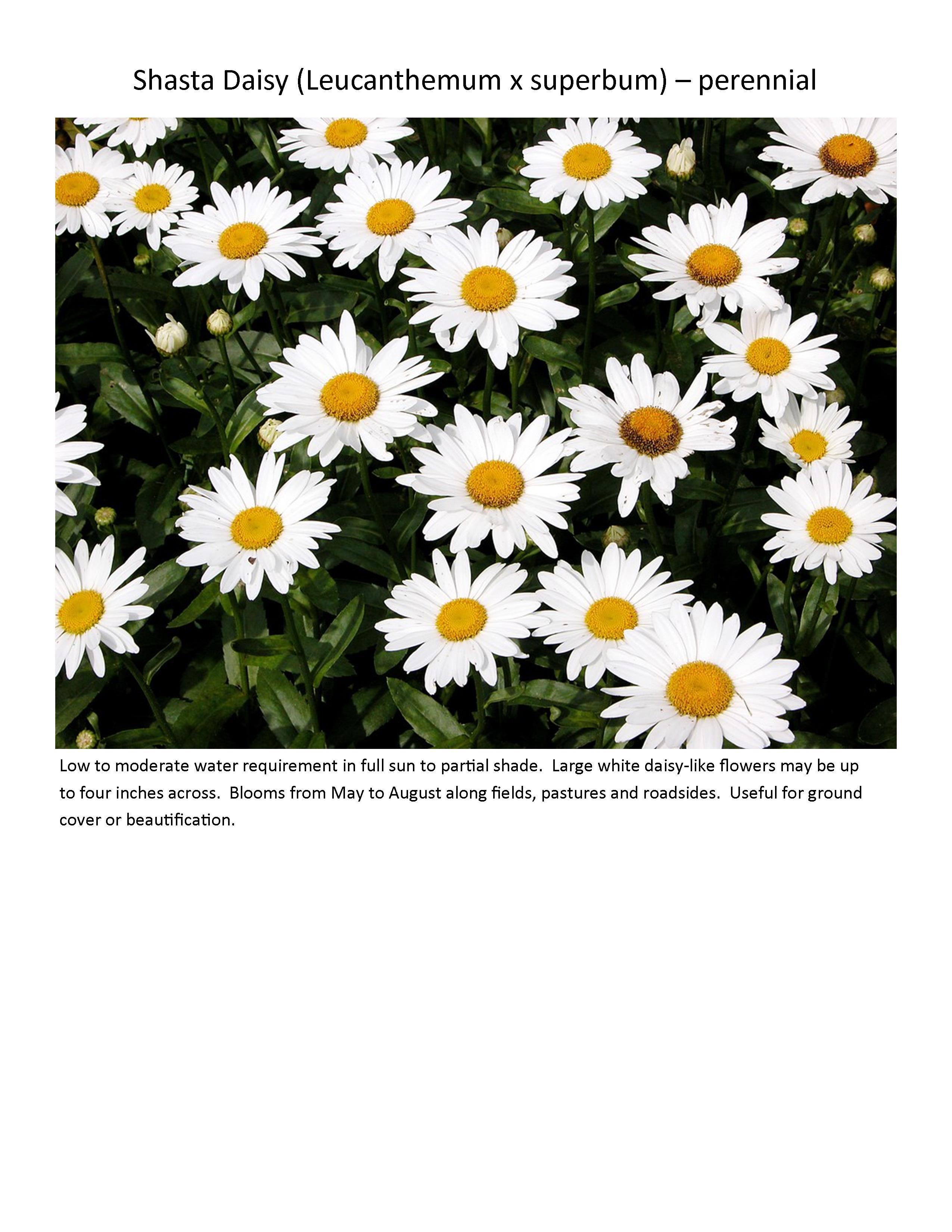 Wildflowers ladybug anew green izmirmasajfo Image collections